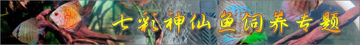 七彩神仙鱼饲养专题