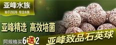 亚峰石英球培养好氧硝化细菌和厌氧菌构建完整氮循环