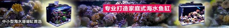 专业打造家庭式中小型海水珊瑚缸-金尼卡