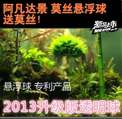 水草造景革命 美易透明悬浮球 阿凡达景莫丝球