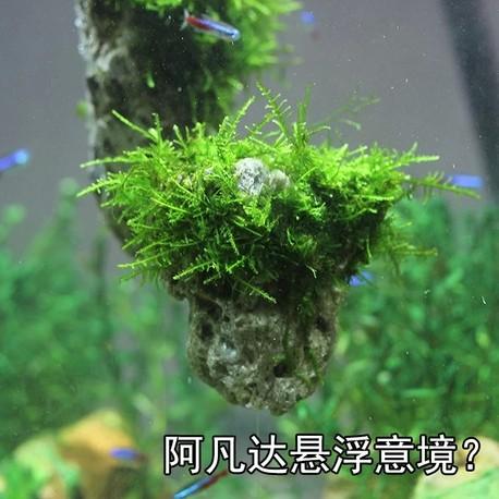鱼缸造景装饰 水族箱造景悬浮石 水草造景石 假山石 阿凡达布景