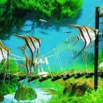 热带鱼混养的原则 - 怎样搭配混养大型和小型热带鱼?大鱼小鱼混养探讨