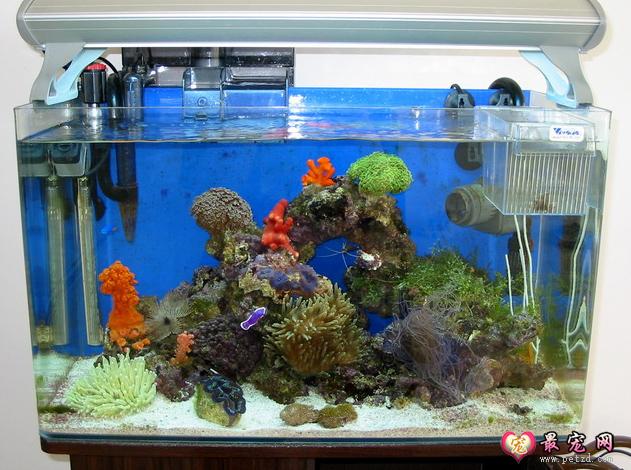 海水缸 简化 好上手 如何 怎么样养海水鱼 最宠网