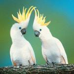 鹦鹉常见种类有哪些?中大型鹦鹉有哪些? 鹦鹉种类入门介绍