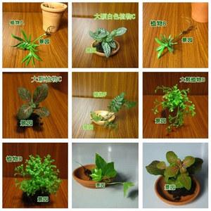 苔藓微景观 苔藓生态瓶 苔藓造景 苔藓DIY 苔藓 必备装饰植物