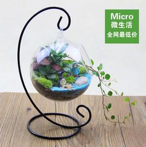 创意微景观 苔藓生态瓶 特价鱼缸 盆栽 雨中邂逅 情人节送礼物