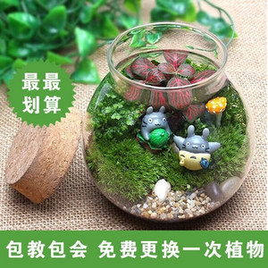 苔藓微景观创意生态瓶 办公室手工DIY蕨类小盆植物 绿色植物盆栽