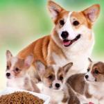 狗狗不能吃的食物汇总,养狗的人一定要注意! 好狗粮是怎样炼成的?
