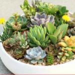 常见多肉植物夏季型和冬季型的分类多肉植物防辐射花卉盆栽推荐
