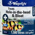 热带鱼头洞病治疗方法 龙鱼头洞病治疗全过程