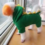 秋冬季节如何为狗狗选择合适的衣服 狗狗衣服推荐