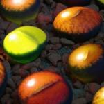 会发光的生石花,让你的生石花炫起来! 奇趣多肉植物怎么挑选?