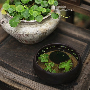 易格自然 水培微景观 创意 绿植 盆栽 【一叶浮生】