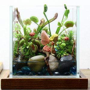 易格自然 苔藓微景观 生态瓶 创意绿植礼品 食虫植物 【精灵】