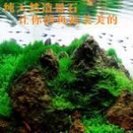 鱼缸造景石头有哪些?怎么选?青龙石火山石松皮石浮石等… 造景石可搭配沉木水草造景