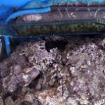 海水缸活石(生物石)的由来和如何辨别好活石? 挑选活石、处理活石的方法探究