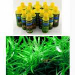 阴性水草光合作用与酵素、微量元素之间的关系 养阴性水草要补充必要的微量元素