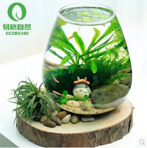 易格自然-迷你水生态瓶-创意水草造景礼品鱼缸-鱼虾套装-免过滤不插电