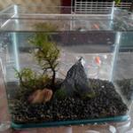 教你自制生态鱼缸-打造桌面小型生态鱼缸造景全过程 自制生态鱼缸教程DIY
