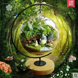 苔藓微景观生态瓶_办公室创意新奇迷你植物组合小盆栽_龙猫摆件DIY