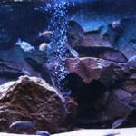 鱼缸造景中哪种风格比较好打理?水草缸与三湖缸的对比