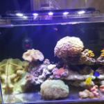 专业的金尼卡海水珊瑚缸使用评价 让你专注于养鱼和观赏,省去繁杂的鱼缸搭建选配件过程