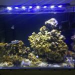 高钙活石对于海水缸开缸的重要性和最佳条件,及养活石爆藻的正确方法 海水活石开缸鱼友语录