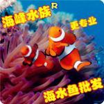 小丑鱼珊瑚等海水鱼批发渔场实拍及鱼友买家实评 鉴别好渔场的方法