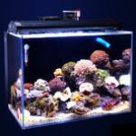 打造一个海水鱼水族箱让你亲近大自然,优质人工合成海水足矣媲美自然海水 模拟好海水环境是养海水鱼的基础