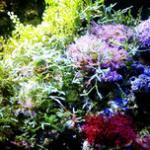 海藻缸的建立方法,为什么要建立藻缸?海藻造景如同彩色版的淡水草缸 海藻生长纪实及实评