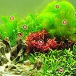 新开缸水草缸如何挑选和种植水草 水草前中后景搭配方案