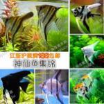 神仙鱼的观赏要点、选购、混养及鱼缸造景指南 神仙鱼鱼缸适合种养高大水草