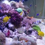 海水观赏鱼的混养搭配实战经验分享 海水观赏鱼如何混养?
