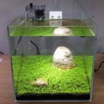 迷你对叶草草坪水草种子种植方法 推荐无水种植法,有条件的可以用有水鱼缸种植法