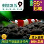 养好水晶虾并不难:水晶虾的饲养奥秘养好水晶虾需注意的五个方面