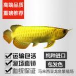 济南龙鱼销售鱼管家高档观赏鱼(红龙、金龙、过背、高背、魟鱼、虎、日本锦鲤、鹦鹉等)