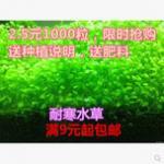 水草种子的种植方法 种子没发芽之前先不要将鱼缸加满水哦