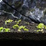 尼特利水草泥草缸开缸纪实之二自己动手搭建草缸环境实录