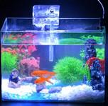 迷你小鱼缸开缸全过程教程,可养灯科鱼、水晶虾等小型观赏鱼虾 新手开缸教程