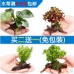 四种适用于乌龟养殖的水草 适宜的水草对乌龟养殖有好处