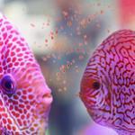 哪个牌子的热带鱼饲料好?养什么样的鱼该吃什么样的饲料 养鱼饲料选购指南