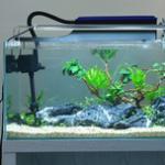 十二种鱼缸过滤器的优缺点横向对比 各种类鱼缸过滤器作用总结