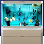 选一款好的鱼缸,给观赏鱼一个安逸的家 鱼缸导购