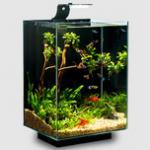 阿诺比鱼缸怎么样,生态鱼缸品牌哪个好-详细解析 不是所有鱼缸都叫生态鱼缸