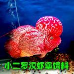 罗汉鱼肿嘴病的症状分析 罗汉鱼肿嘴病预防方法
