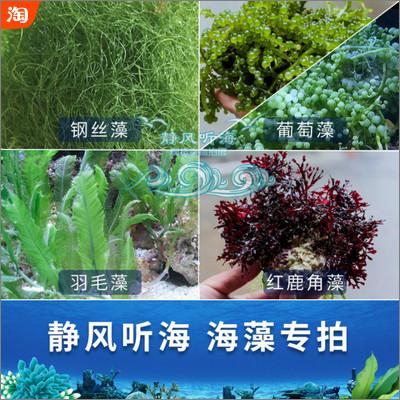藻缸必备-海水复合海藻