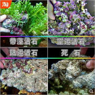 带藻活石-空运活石-陆运活石-品牌P石-死石