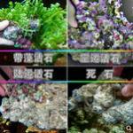 海缸开缸两种方式的比较 活石 vs P石