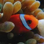 海水鱼缸常见生物一览及饲养经验 鱼、虾、蟹、螺、海参、贝