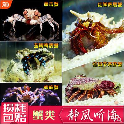 萌萌的蟹类